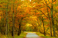 Rapidan Fire Road- Autumn