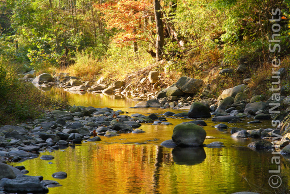 Autumn on the Rapidan